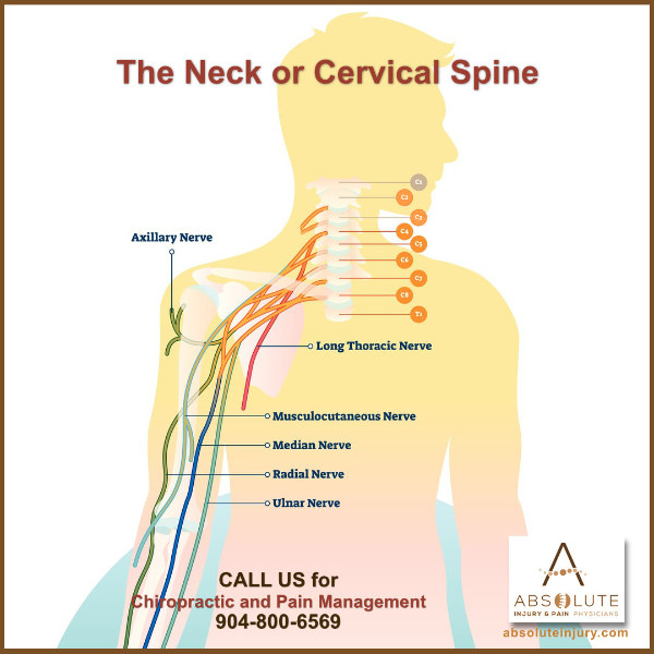 spinal anatomy nerve pain neck cervical spine - Absolute Injury ...