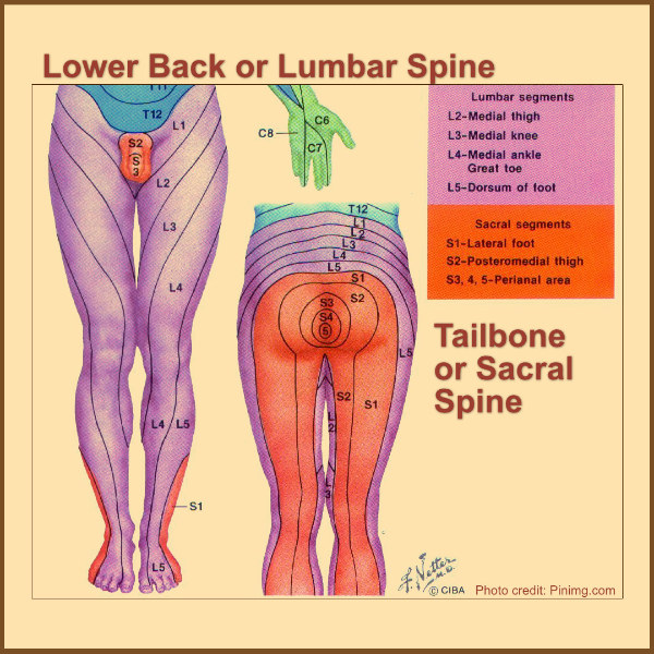 spinal anatomy nerve pain lumbar sacral spine