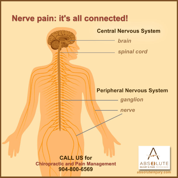 Understanding Nerve Pain Through Spine Anatomy Absolute Injury