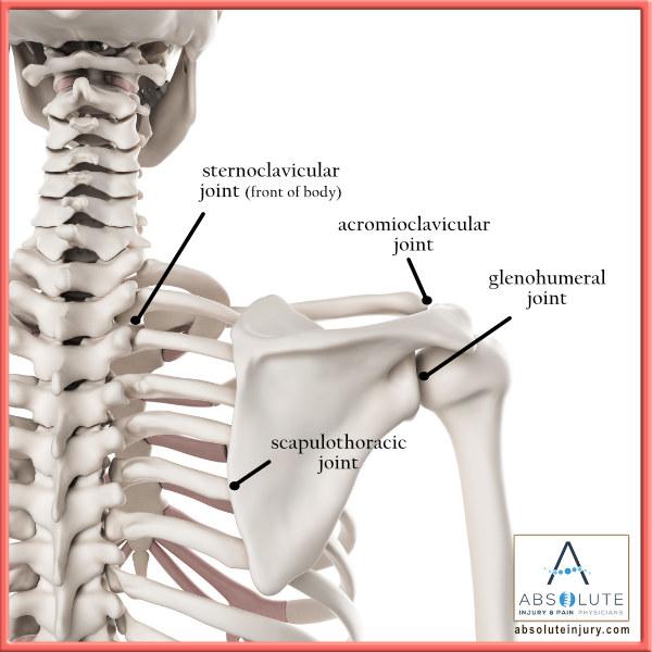 Shoulder Anatomy Shoulder Joints