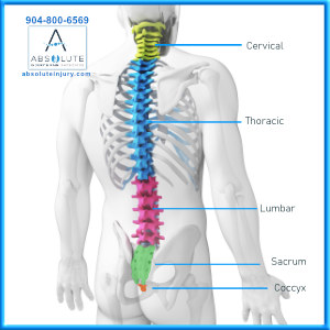 Knowing Your Spine Anatomy